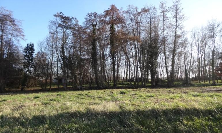 Terrain plat et arboré à Rieux volvestre